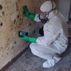 Mold Cleaning 250x250